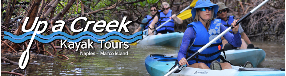 Up a Creek Kayak Tours in Naples Florida